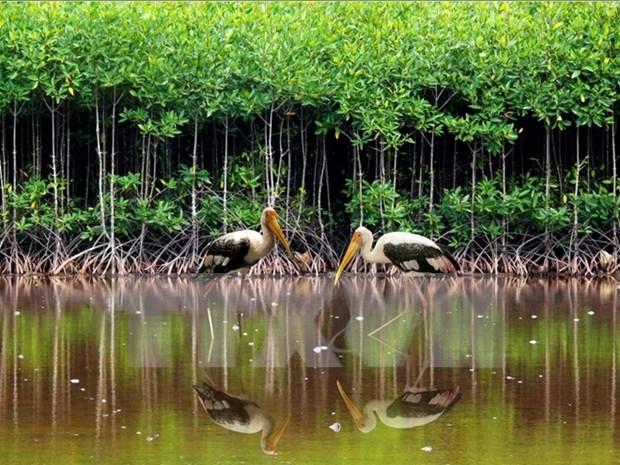 越南举行活动 响应世界湿地日 hinh anh 1