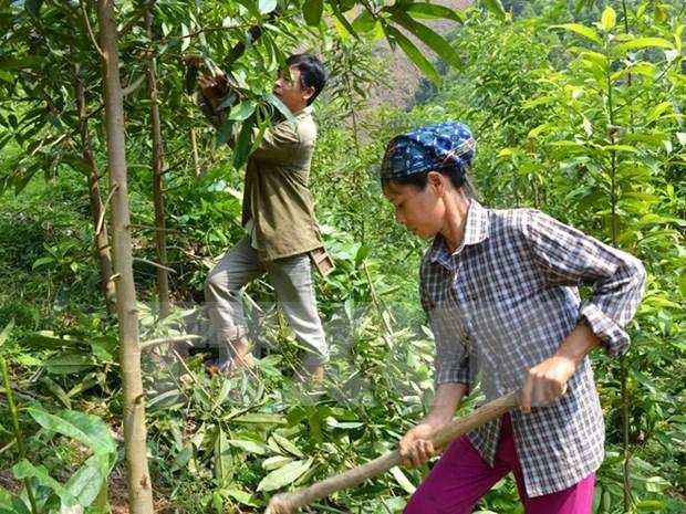 越南清化省充分发挥森林环境服务支付机制的作用 hinh anh 1