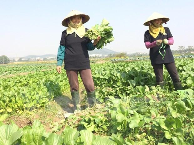 有机农业,启发性问题 hinh anh 1