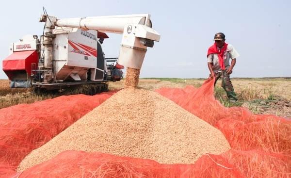 2017年老挝大米出口量预计达40万吨 hinh anh 1