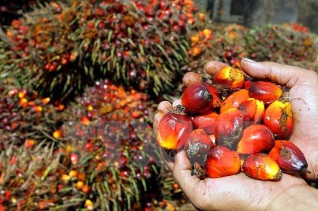 2017年印尼棕榈油出口量可达2700万吨 hinh anh 1