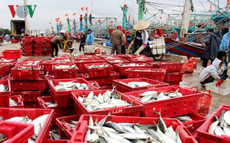 平定省渔民年初出海渔获丰收 hinh anh 1