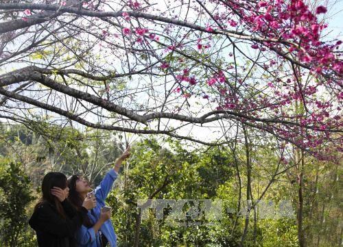 2017丁酉年春节期间赴奠边省旅游的游客量猛增 hinh anh 1