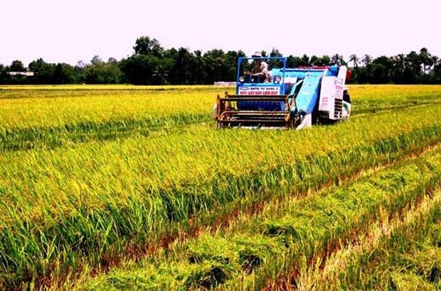 面对融入国际挑战的九龙江平原农业 hinh anh 1