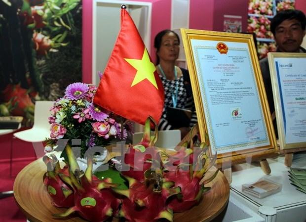 越南火龙果亮相德国柏林国际水果蔬菜博览会 hinh anh 1