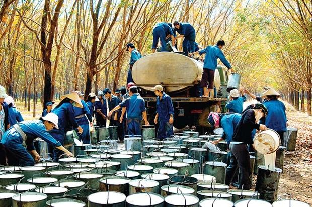 越南嘉莱省批准61个招商引资项目 hinh anh 1