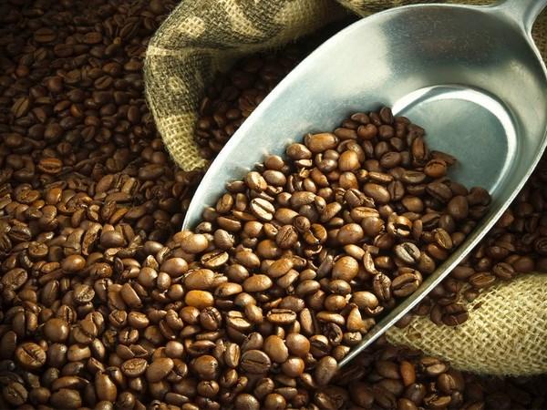 越南着力采取扩大咖啡销售市场的措施 hinh anh 1