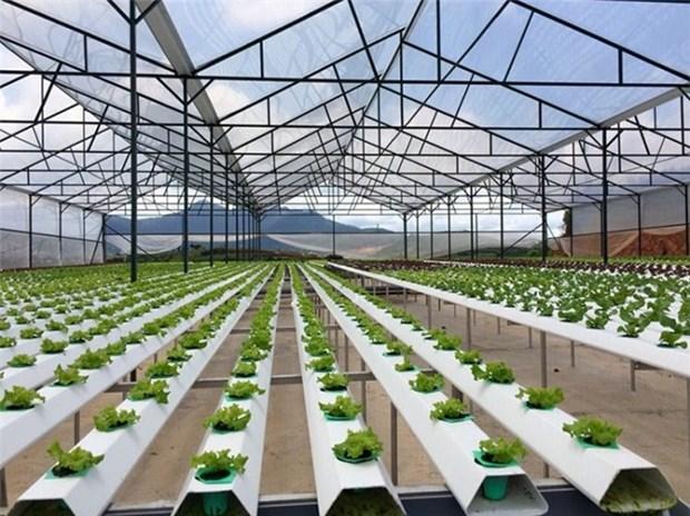 越南嘉莱省投资建设5个高科技农业园区 hinh anh 1
