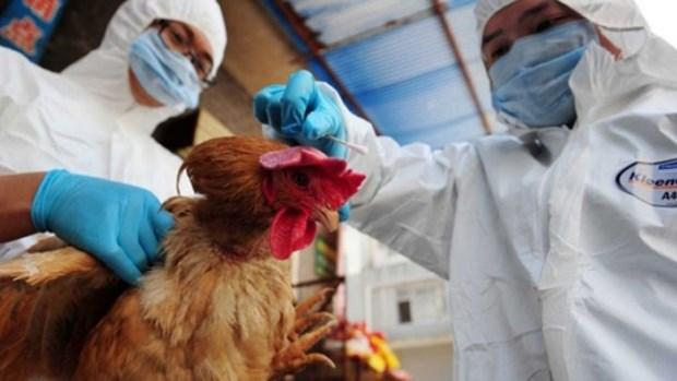 中国广西新增2例H7N9病例 越南高度重视防控工作 hinh anh 1