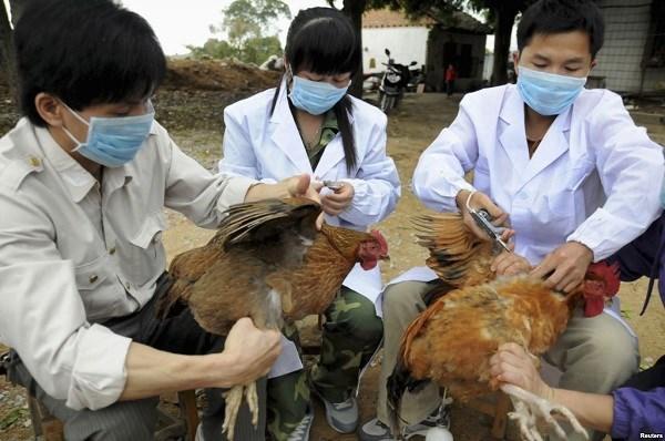 河内市公布两条预防禽流感热线电话 hinh anh 1