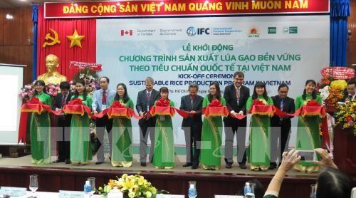 越南农民采用国际标准推动稻米可持续生产 hinh anh 1