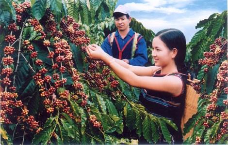 加大得乐邦美蜀咖啡在世界市场上的品牌保护力度 hinh anh 1
