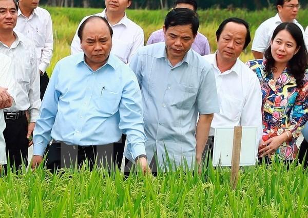 越南政府总理阮春福:越南稻谷产业正进入革新阶段 hinh anh 1