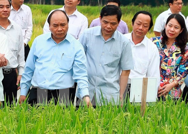 阮春福总理:安江省应关注提高出口粮食质量与附加值 hinh anh 2