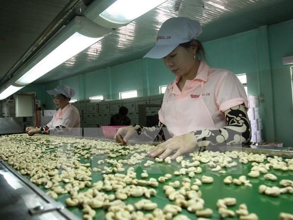 2017年前两个月越南腰果出口额下降3.3% hinh anh 1