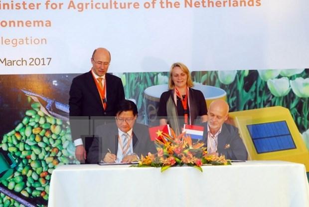 胡志明市与荷兰加强农业与信息技术合作 hinh anh 1