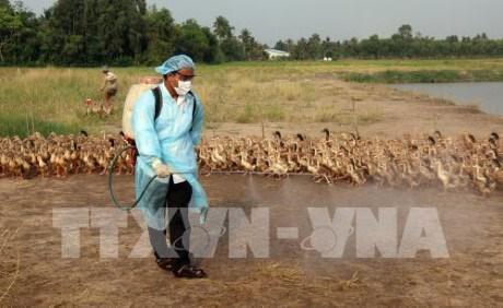 河静省一乡一坊发生H5N1禽流感疫情超过2000只家禽被扑杀 hinh anh 1