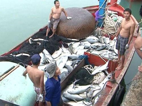 越南乂安省渔民开始恢复正常渔业捕捞活动 hinh anh 1