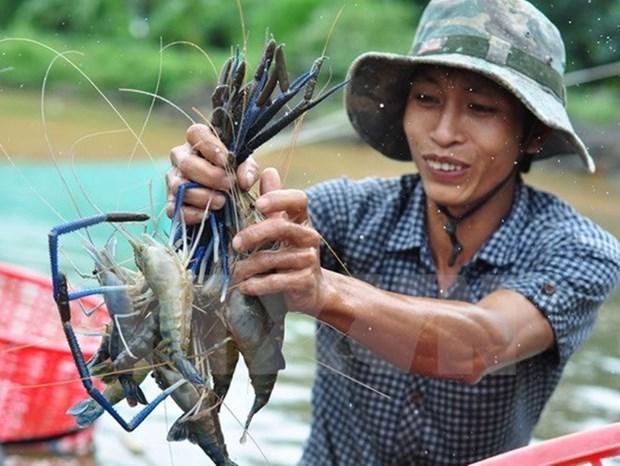 """""""越南优质水产品""""计划正式启动 hinh anh 1"""
