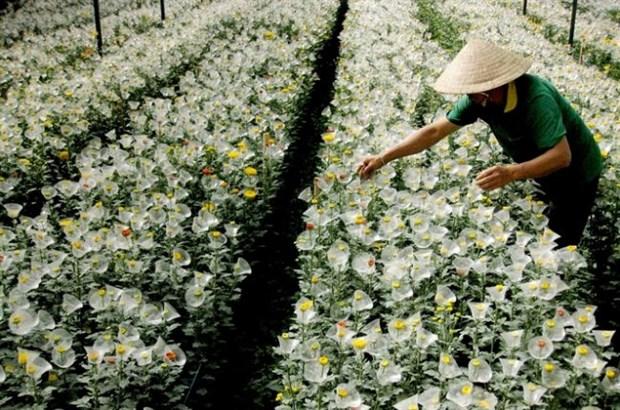 日本在林同省开展花卉种植合作项目 hinh anh 1