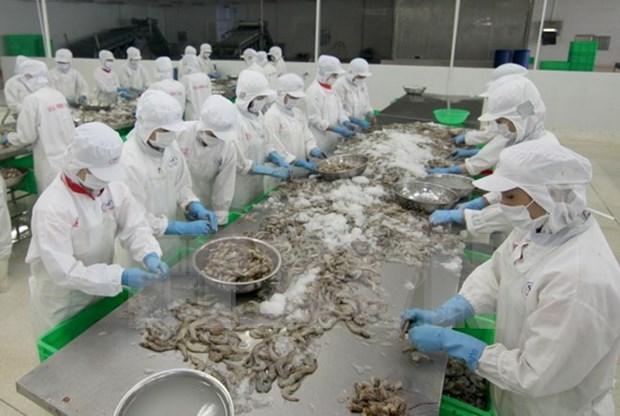 越南拟定2025年前虾类养殖业发展计划 hinh anh 1