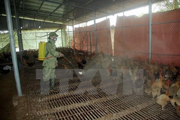越南颁布《国家禽流感监测计划》 hinh anh 1
