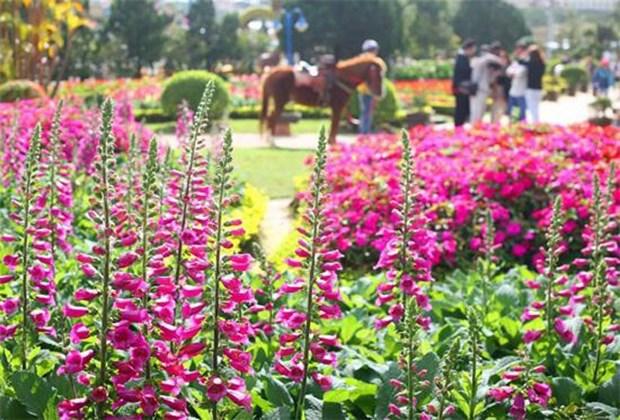 2017年大叻花卉节将于年底举行 hinh anh 1