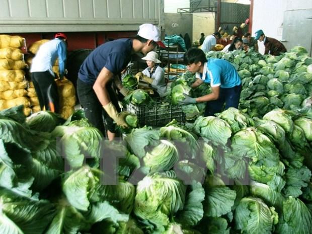 越南农产品:机遇与挑战并存 hinh anh 3