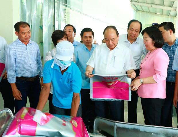 阮春福总理:朔庄省应集中扩大具有优势的高产水稻和果树种类种植面积 hinh anh 3