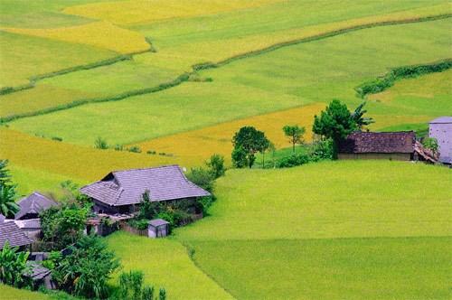 越南是全球第6大水稻种植国家 hinh anh 1