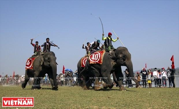 西原野象驯养业与赛象节(组图) hinh anh 10