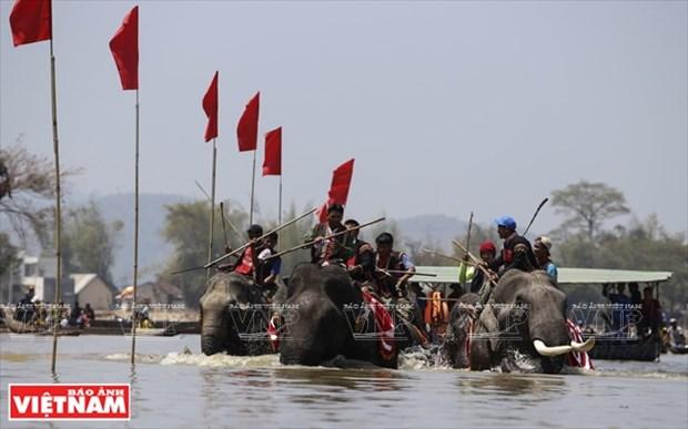西原野象驯养业与赛象节(组图) hinh anh 12