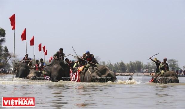 西原野象驯养业与赛象节(组图) hinh anh 13