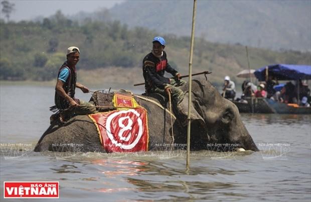 西原野象驯养业与赛象节(组图) hinh anh 14
