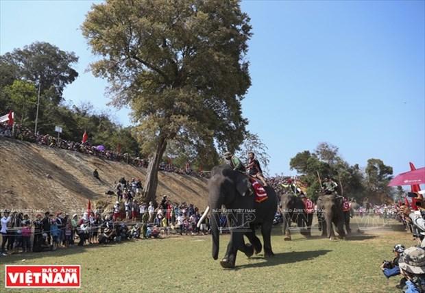 西原野象驯养业与赛象节(组图) hinh anh 9