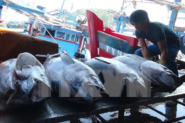 越中联合举办北部湾渔业资源增殖放流与养护活动 hinh anh 1