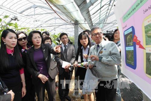国家副主席邓氏玉盛在日本福冈县开展的系列活动 hinh anh 3