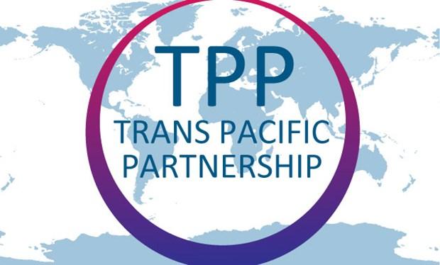 日本新西兰高官举行会谈 力促TPP 11月达成协议 hinh anh 1