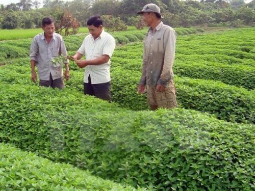 日本企业有意在越南安江省开展有机农业合作项目 hinh anh 1