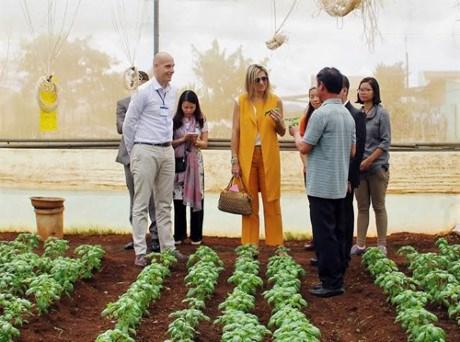 荷兰王后走访越南林同省农企和农民 hinh anh 1