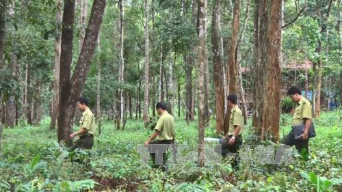 西原地区力争实现新造林面积达1.25万多公顷的目标 hinh anh 1