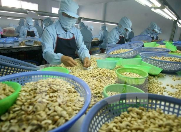 2017年越南腰果对欧盟出口额有望达10亿美元 hinh anh 1