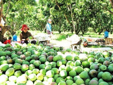 越南庆和省拟建高科技农业园区 hinh anh 1