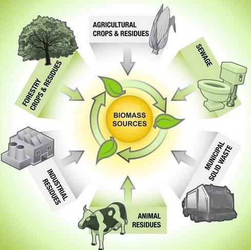 美国生物能源系统公司协助越南发展生物质能源技术 hinh anh 1