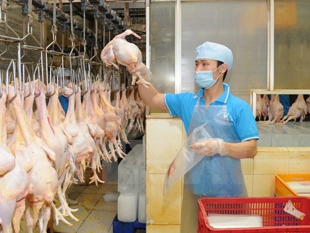 越南首批禽类产品将于今年年底抵达日本 hinh anh 1