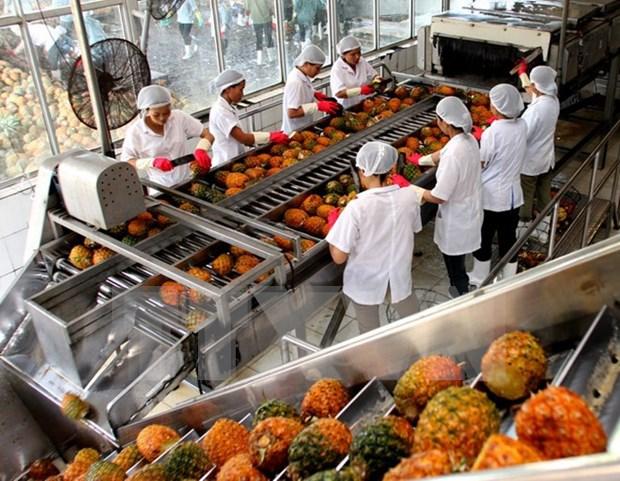 越南蔬果出口活动的机遇与挑战 hinh anh 1