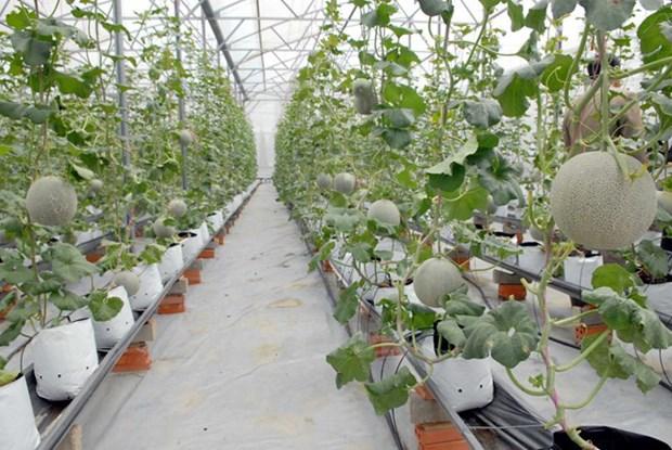 农产品是同奈省内资企业的主要出口商品 hinh anh 1
