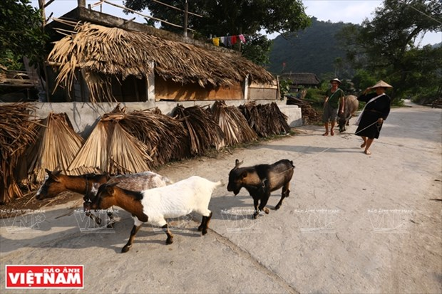 河江市的草屋村——国内外游客的有趣旅游点 hinh anh 16