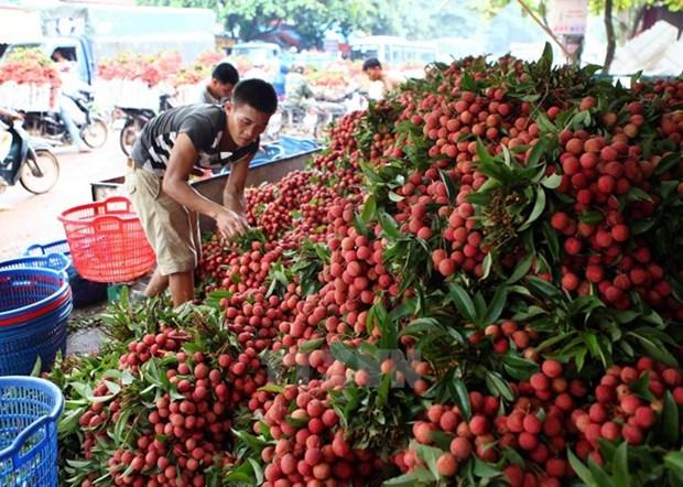 越南企业在对澳大利亚出口产品需了解该国相关规定 hinh anh 1