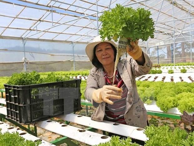 日本协助安江省发展农业 应对气候变化 hinh anh 1